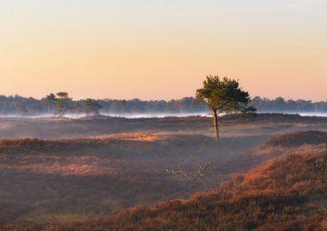 Spel van licht en schaduw op Kalmthoutse Heide van Jos Pannekoek