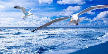Seagulls and Nothern Sea van Jörg Hausmann