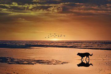 op het strand van Elianne van Turennout