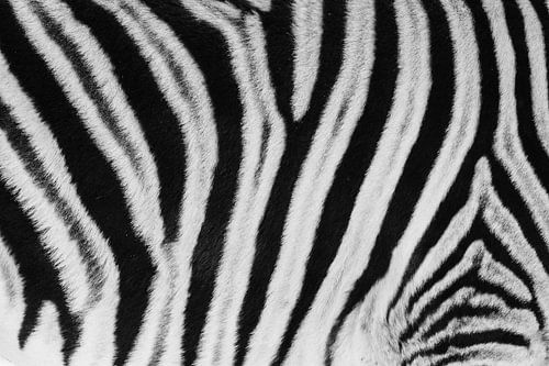 Zwart-wit detail van de vacht van een steppezebra / zebra - Etosha, Namibië van Martijn Smeets