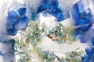 IJsbloemen 3 von Wim Roebroek