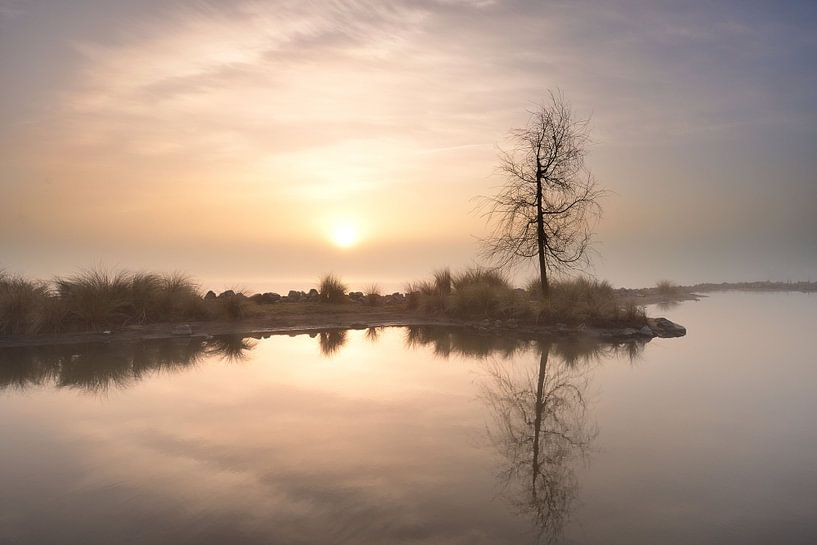 Eenzame boom van John Leeninga