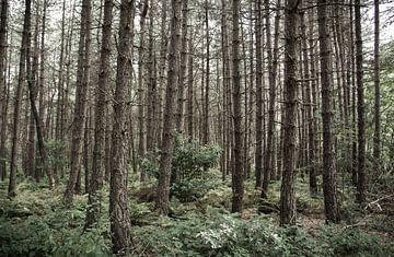 gruwel bos von Marco Jansen