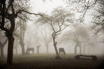 Pferde in einem nebligen Obstgarten, Denisa VLAICU von 1x