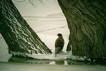 Fazant in de winterse Hollandse landschap van Tina Linssen