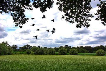 Taubenflug von Edgar Schermaul