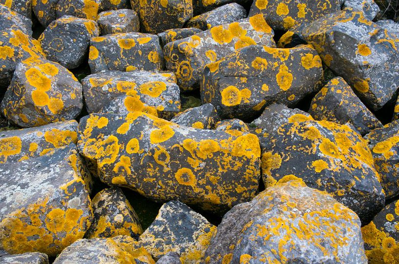 Stenen met korstmos van Ton de Koning