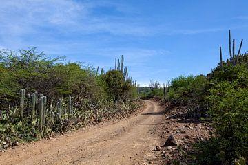 Landschaft von Bonaire. von Vanessa