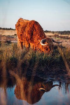 Schottische Highlander Sonnenuntergangs-Reflexion von Wahid Fayumzadah