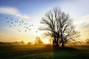 De schoonheid van het Brabantse land van