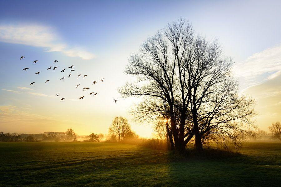 De schoonheid van het Brabantse land
