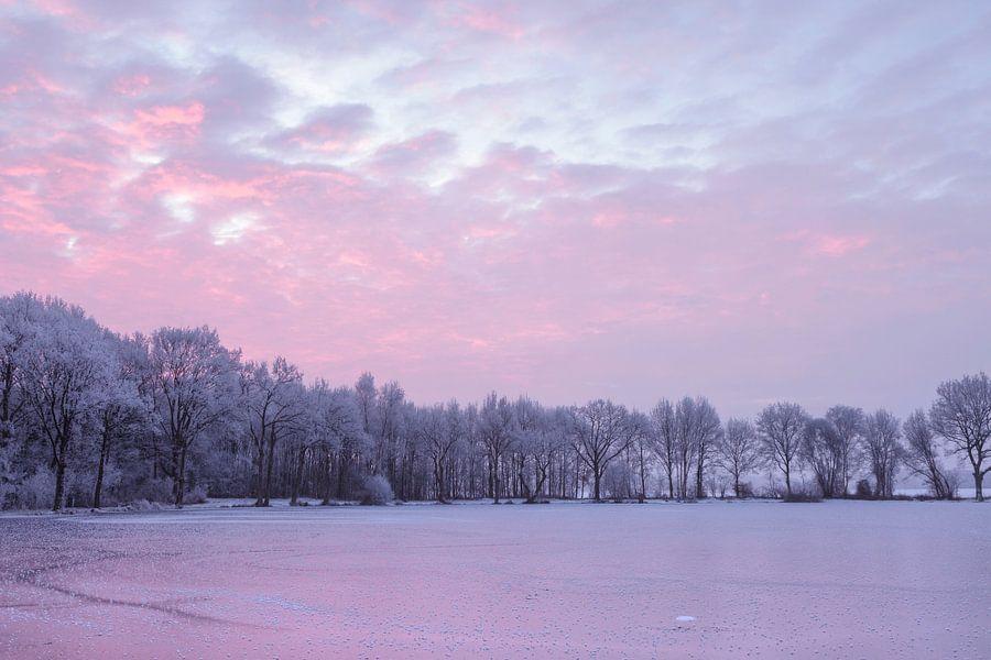 Meer met witte bomen in het roze uur