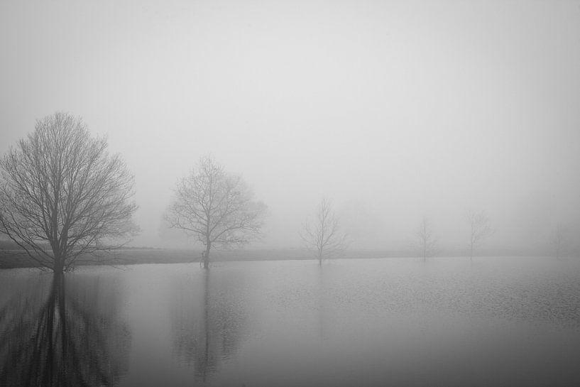 Bomenrij in de mist van Anne Reitsma