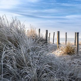 Winterse wandeling door de duinen van Jaap Spaans