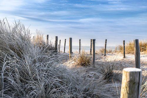 Winterse wandeling door de duinen