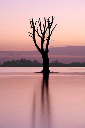 Eenzame boom in de rivier
