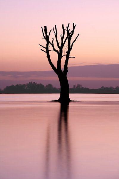 Eenzame boom in de rivier van Mark Leeman