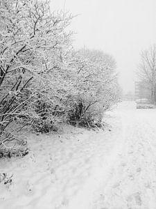 Snowy world van Eline