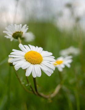 Blume von Wouter Bos