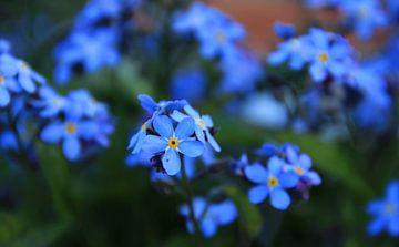 Het is lente! von Henriëtte Kelderman-Makaaij