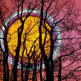 Volle maan in het bos van Eva van den Hamsvoort