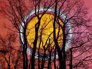 Volle maan in het bos van