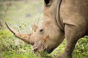 Grazende neushoorn in Zuid-Afrika van Marcel Alsemgeest