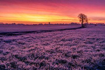 Sonnenaufgang auf dem Feld von Durk-jan Veenstra