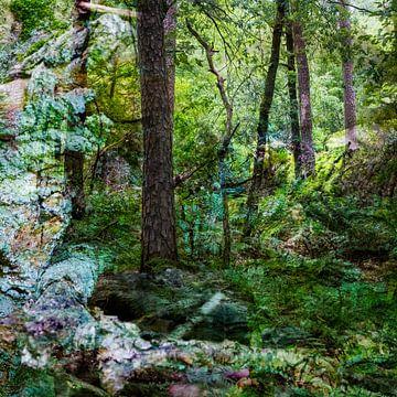 Fairy Tale Forest II van Caroline Boogaard