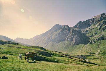 Dreamy land von Lumi Toma