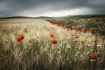 Landschaft Mütze Griz Nez von Peter Poppe
