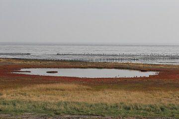 De Schorren, Texel. van Jolande Monique Honig
