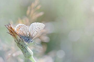 Zonnebadende vlinder ... (Blauwe versie) (vlinder, zomer, natuur) van Bob Daalder