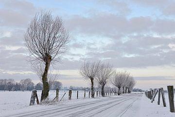 Winterimpression am Niederrhein, Bislicher Insel, Morgenstimmung. von wunderbare Erde