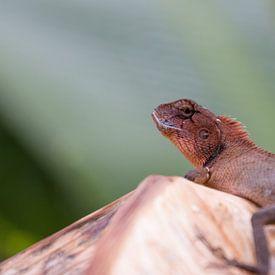 Orientalische Garteneidechse (Oriental garden lizard) von Thijs van den Broek