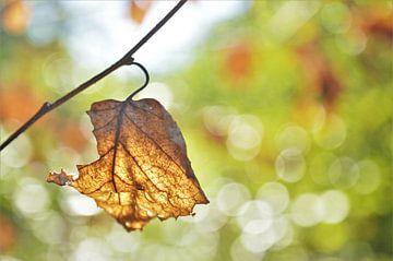 Herfstblad met Tegenlicht / Zonlicht van DoDiLa Foto's