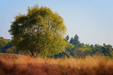 Nederlandse wildernis van Jaap Kloppenburg