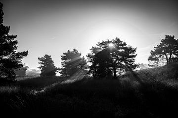Lever du soleil sur le Veluwe sur Ellis Peeters