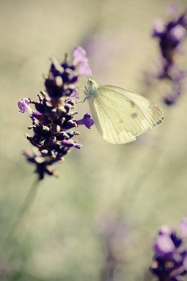 Lavender dreams van LHJB Photography