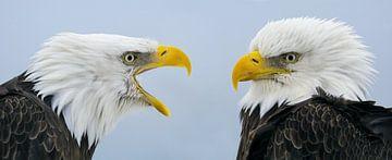 Double portrait aigle chauve sur Harry Eggens