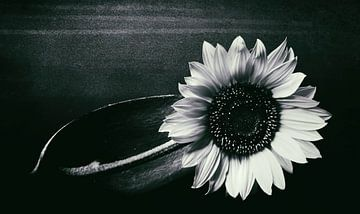 Sonnenblume van Silke Reimann