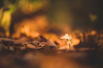 Macro van twee paddenstoelen van Inge Smulders