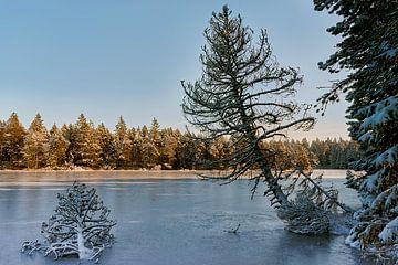 Dennen in het meer van CSB-PHOTOGRAPHY