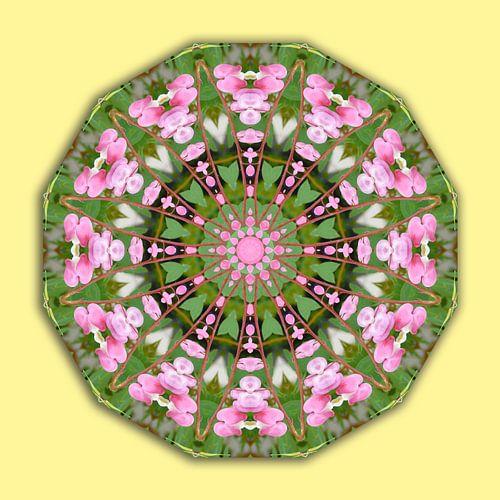 Bleeding heart, Flower Mandala