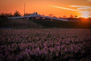 Hyacinten bij zonsondergang 2 van Peter Heins
