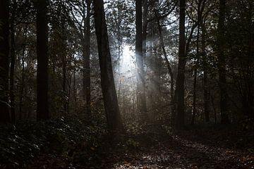 Sonnenstrahlen im Wald von Koen Ceusters