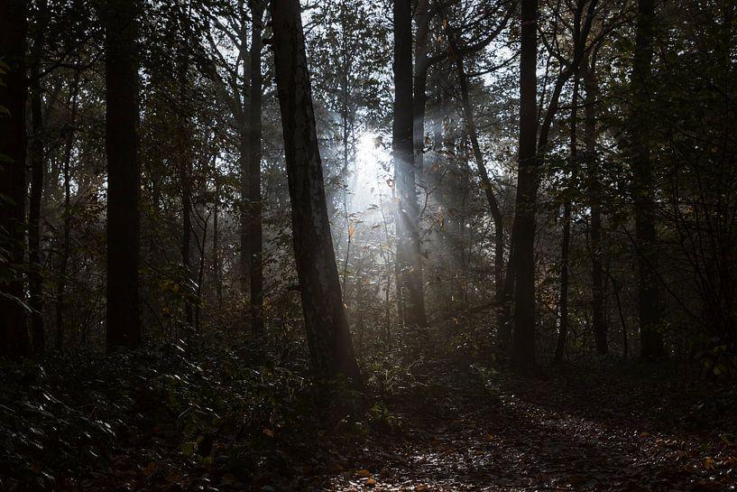 sunbeams in the forest van Koen Ceusters