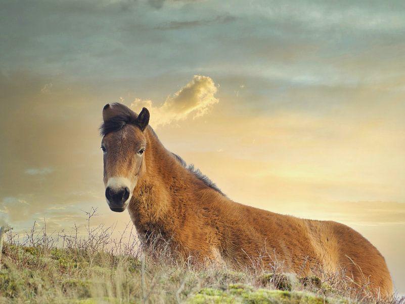 Konikpaard zonsondergang van Wendy Tellier - Vastenhouw