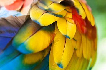 Geelvleugel Ara van Dennis Van Den Elzen