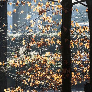 Zonlicht door bladeren van Etienne Oldeman